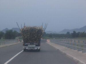 Dieser Wagen bringt Feuerholz nach Maroua.