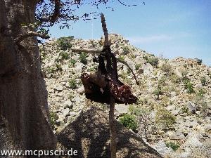 Am Dorfrand hängt ein halbierter Ochsenkopf auf einer Stange