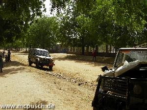 Der Niembaum ist typisch für Maroua - er steht an vielen Strassen.