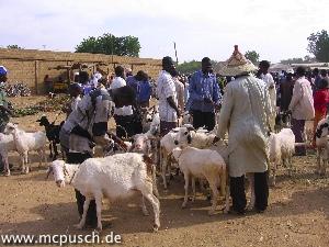 Schafsmarkt